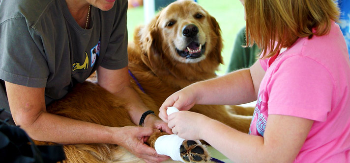 Emergency-first-aid-tips-for-dogs