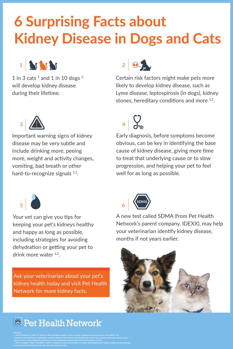 Pet Health Network kidney