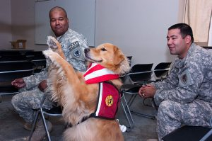 therapy-dog-military