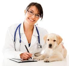pet-insurance2