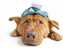 pet-insurance4