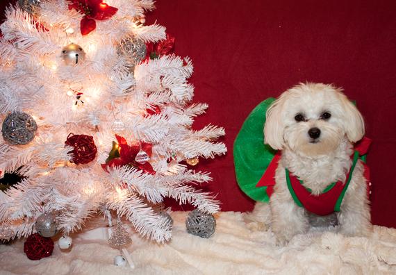 zoey-christmas