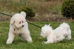 puppy-play2