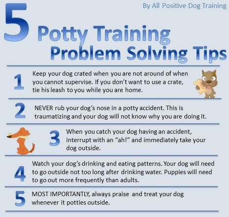What To Do When Potty Training Your Dog Isn T Working